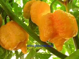 bild på 7 pod Peach